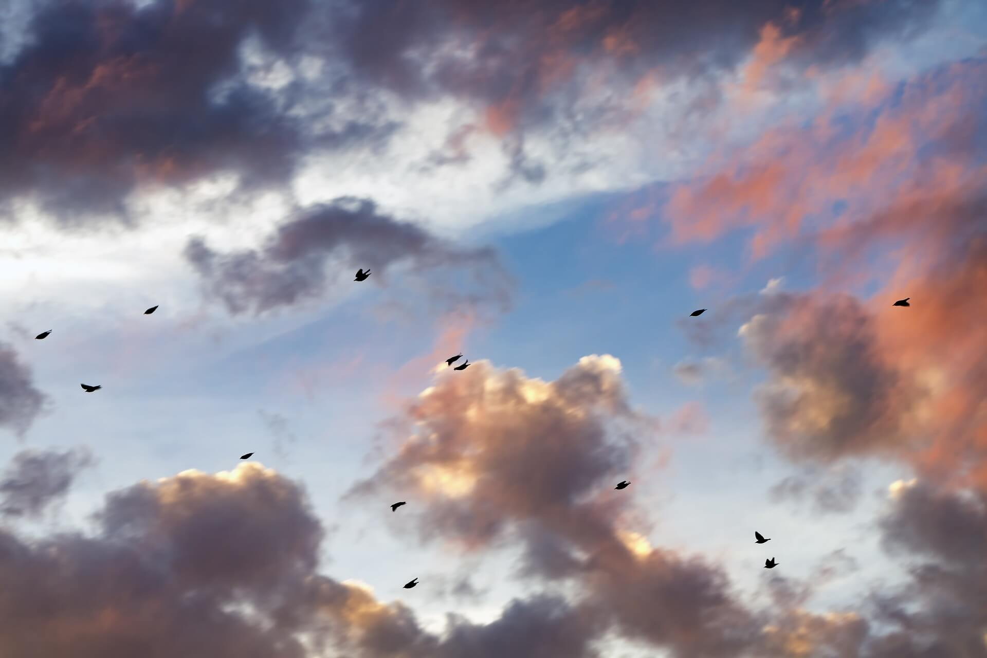 Birds flying into the sunset, diving and climbing.