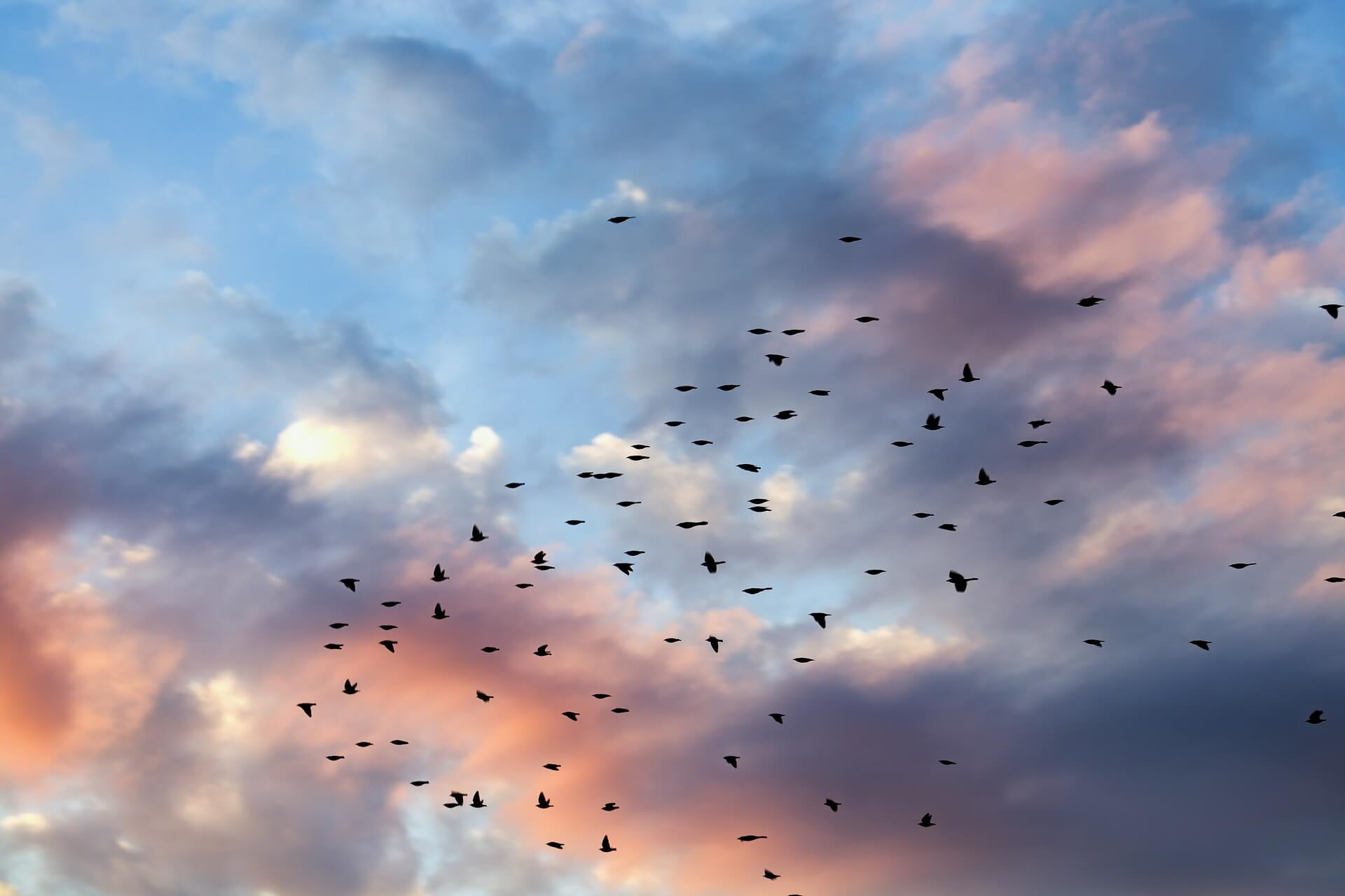 Birds Flying in a beautifully lit sky.